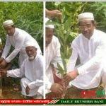 গাজীপুর ইউনিয়নে বৃক্ষ রোপণ করেছেন শেখ মোঃআমিনুল ইসলাম